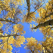 Aspens Skyward Poster by John Daly