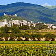 Assisi From The Sunflower Fields Poster
