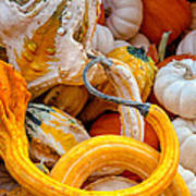 Assorted Gourds Poster