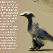 Assuming Corvus Poster