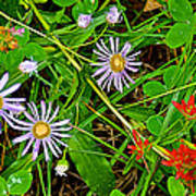 Asters And Scarlet Paintbrush On Swan Lake Trail In Grand Teton National Park-wyoming  Poster