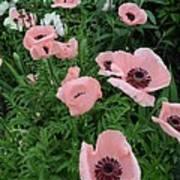 At Bridge Of Flowers  --  Massachusetts  Poster