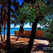 At Dog's Beach In Key West Poster by Susanne Van Hulst