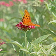 At Rest - Gulf Fritillary Butterfly Poster