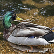 At The Duck Pond V5 Poster