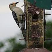 At The Feeder Poster