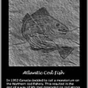 Atlantic Cod Fish Sketch Poster