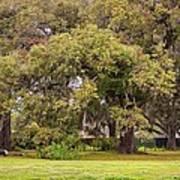 Audubon Park Poster
