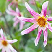 August Flower Gardens Poster