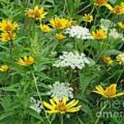 August Wildflowers Poster