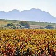 Autum Wine Field Poster