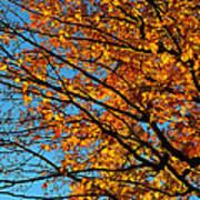 Autumn 2013 Poster