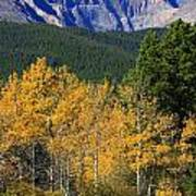 Autumn Aspens And Longs Peak Poster
