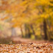 Autumn At Great Falls Poster