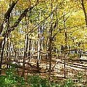 Autumn At Waterfall Glen Poster