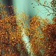 Autumn Aurora Poster