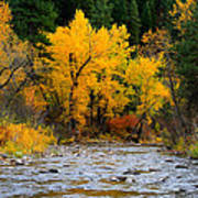 Autumn Beauty In Boise County Poster