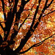 Autumn Beauty Poster
