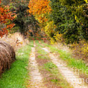 Autumn Beauty On Rural Dirt Road Poster