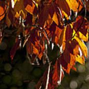 Autumn Beech Leaves Poster
