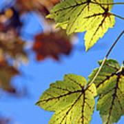Autumn Bokeh  Poster by Chris Anderson
