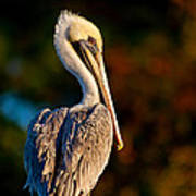 Autumn Brown Pelican Poster