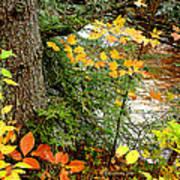 Autumn By A Pennsylvania Mountain Stream Digital Art Poster
