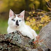 Autumn Cat Poster