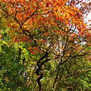 Autumn Color At Old Woman Creek 2 Poster