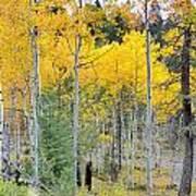 Autumn Colorado-1 Poster