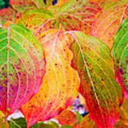 Autumn Colored Leaves Poster