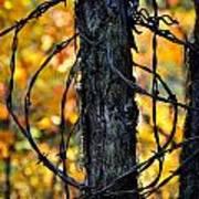 Autumn Colors 1 Poster
