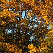 Autumn Colors 11 Poster