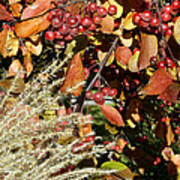 Autumn Crabapples And Tall Grass Poster