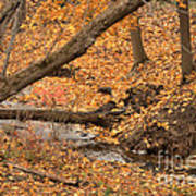 Autumn Creekbed Poster