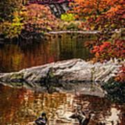 Autumn Duck Couple Poster