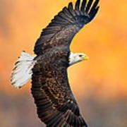 Autumn Eagle Poster