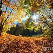 Autumn Fall Landscape In Forest Poster