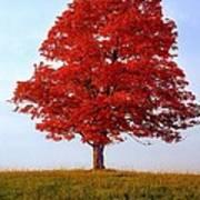 Autumn Flame Poster