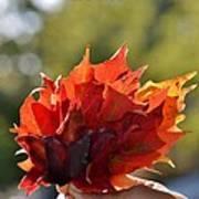 Autumn Flower Poster