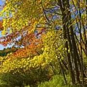 Autumn Forest Scene In West Michigan Poster