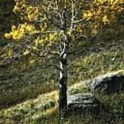 Autumn Glow - Yellowstone Poster