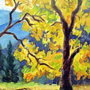 Autumn Gold Yosemite Valley Poster