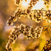 Autumn Goldenrod - Paint  Poster