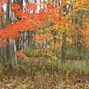 Autumn Golds Poster by Margaret McDermott