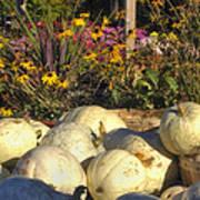 Autumn Gourds Poster by Joann Vitali
