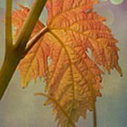 Autumn Grapevine Poster by Fraida Gutovich