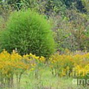 Autumn Grasslands Poster