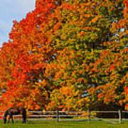 Autumn Grazing Poster