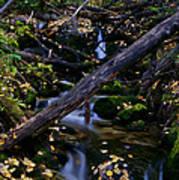 Autumn Greens Poster